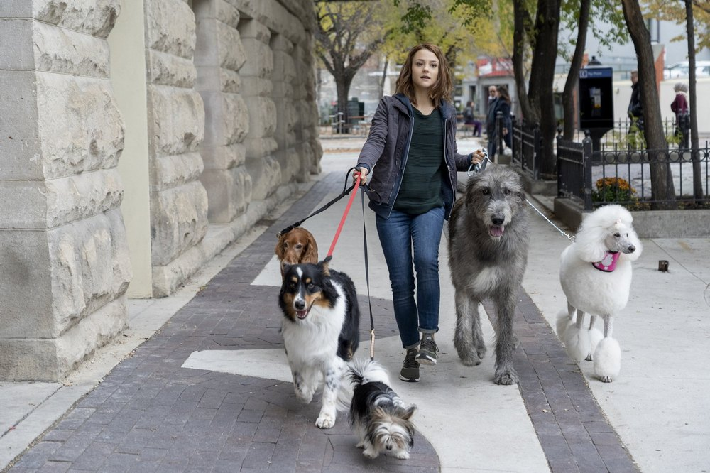 світлини із фильма Фільм - Подорож хорошого пса