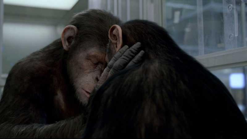 Кадры из фильма цезарь кино обезьяна