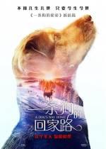 Постеры: Фильм - Путь домой - фото 6