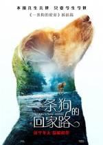 Постеры: Фильм - Путь домой - фото 7
