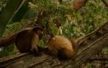 Трейлер к фильму Амазония: Инструкция по выживанию