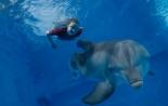 Трейлер к фильму История дельфина 2