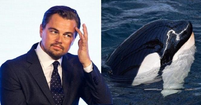 Новости: ДиКаприо попросил Россию освободить китов