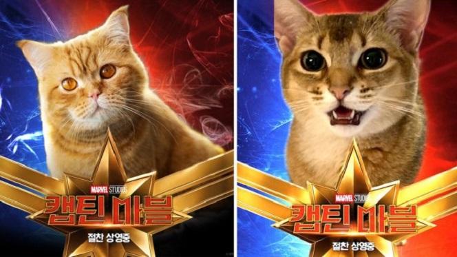 Новости: Фаны Marvel фотошопят котов на обложку Капитана Марвел