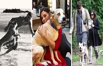 Ченнинг Татум потерял собаку