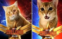 Фаны Marvel фотошопят котов на обложку Капитана Марвел