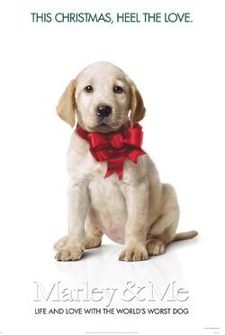 Новости: Собаки – двигатели бокс-офиса