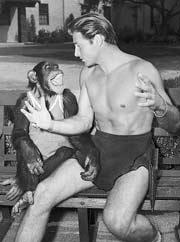 """Новости: Шимпанзе из """"Тарзана"""" умер в возрасте 80 лет"""