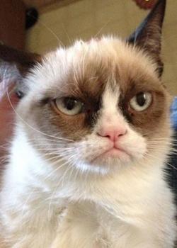 Новости: О знаменитой «сердитой» кошке снимут фильм
