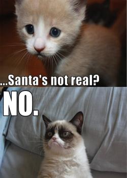 Новини: Grumpy Cat знайде голос